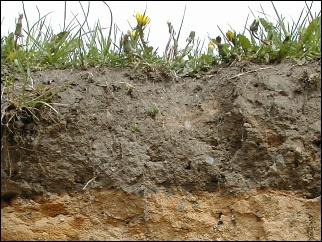 Půdní profil - Blatiny