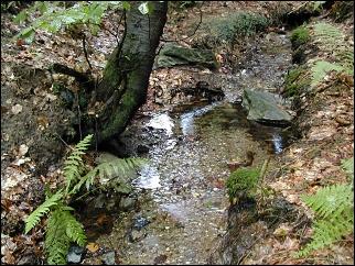 Horní tok řeky Svratky